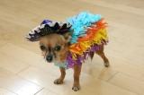 The Dog Days of Essay Fiesta – August19!