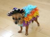 The Dog Days of Essay Fiesta – August 19!